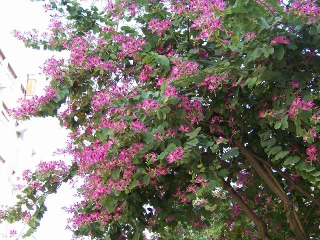 冬天开红花的树有哪些
