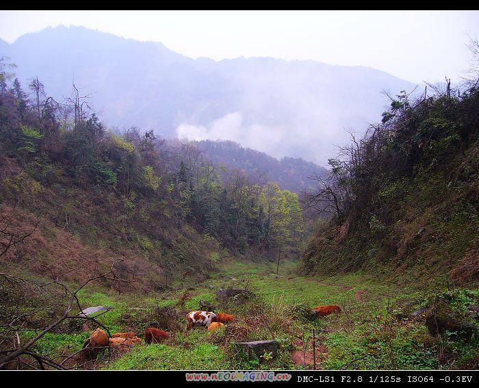 铜锣坝国家森林公园-----风光图片(1)