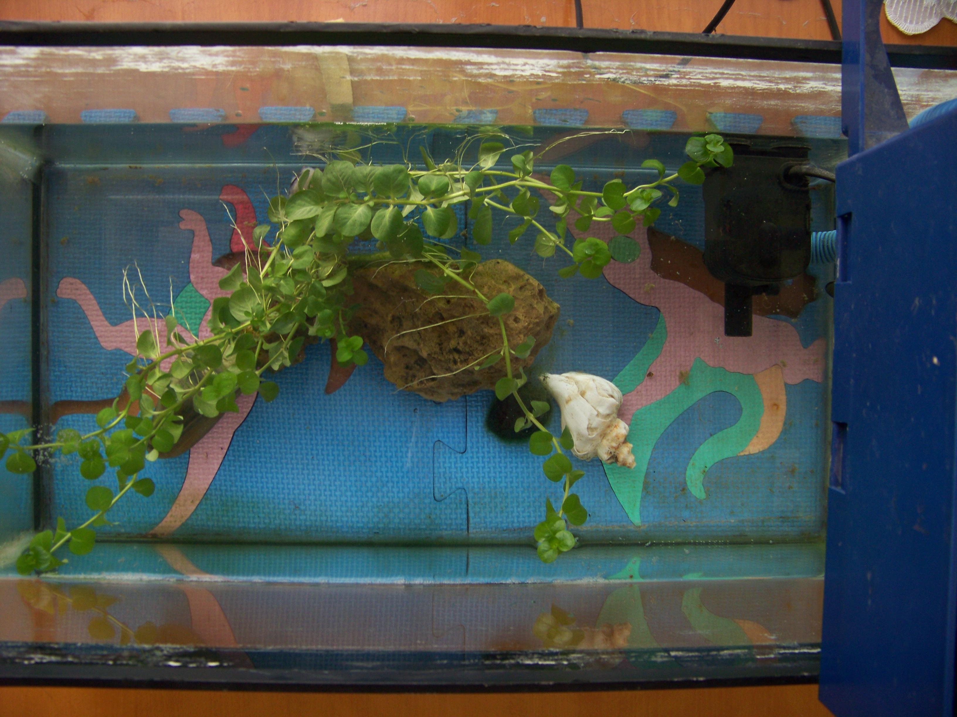 废物利用手工制作鱼缸