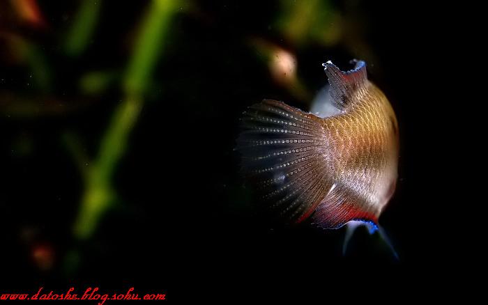 水中的精灵--小朋友的艺术照_大头蛇的避风塘_新浪博客