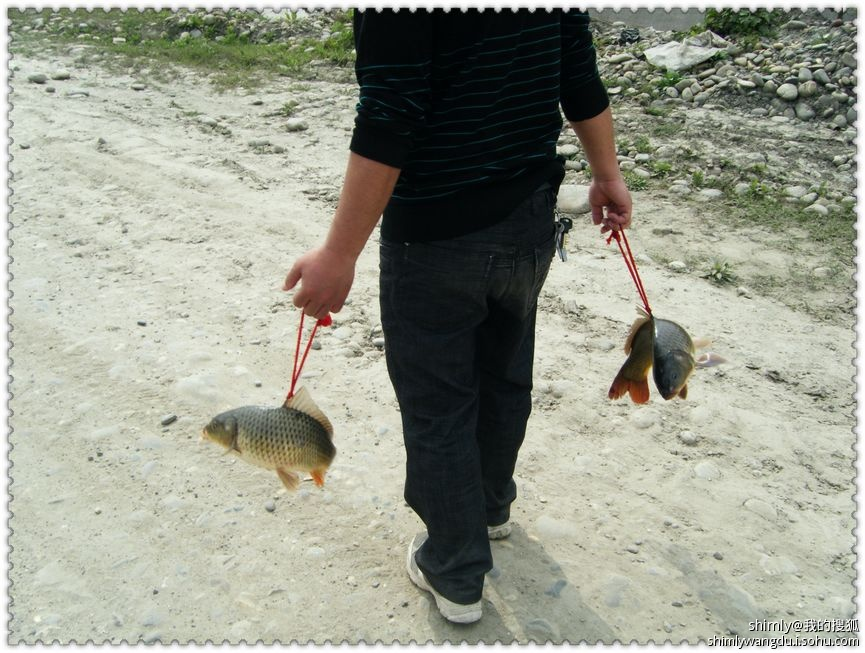 鱼和小树林有个约会