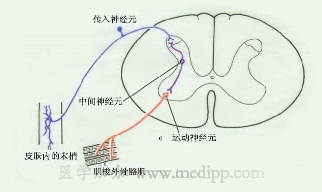 如何判断传入神经和传出神经