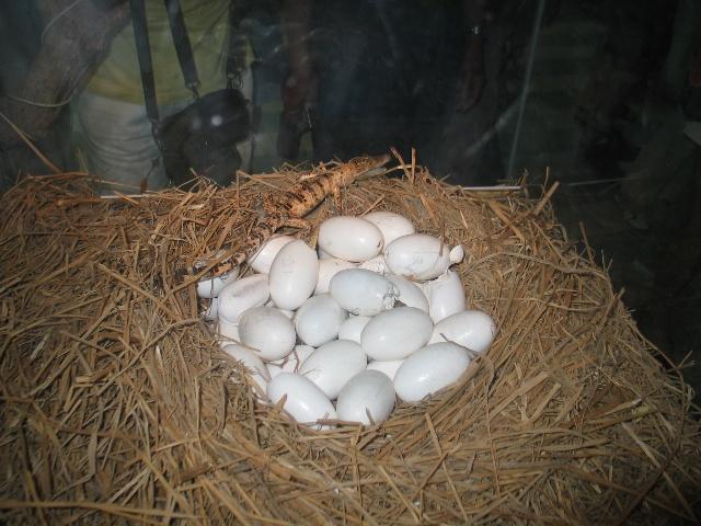 生蛋的动物有哪些