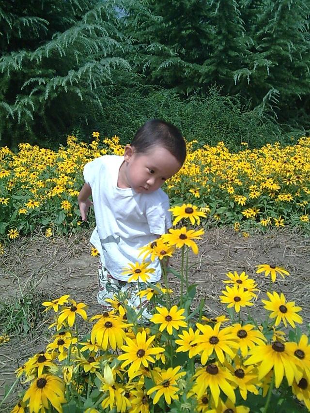 高清花丛风景照片背景