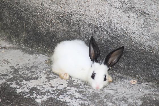 ---狗和兔子是天敌吗?