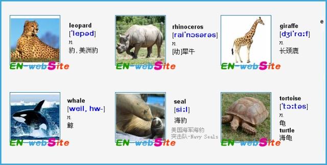 """谁有关于常见""""动物""""英语单词汇总?越全越好?"""