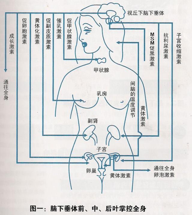 布朗发生器电路图