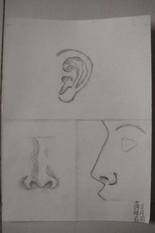 耳朵临摹素描结构