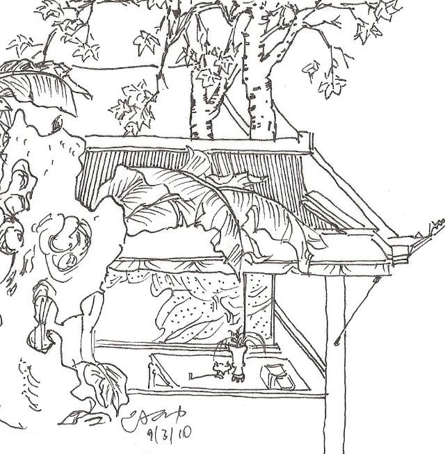 芭蕉树手绘立面图