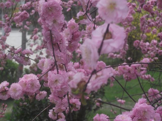 又站在了草坪的桃花树下,发现那颗心长出了许多嫩芽,伸手轻抚,感受到