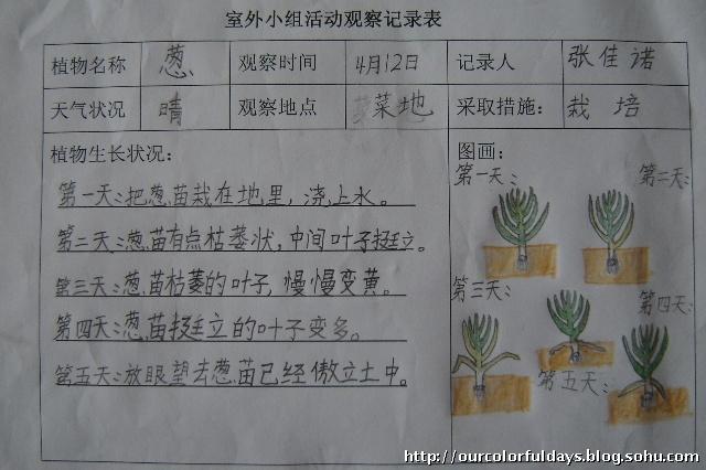 植物观察记录表-青苹果乐园-搜狐博客